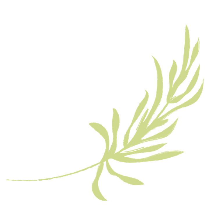 Blooming Light Botanical Alchemy