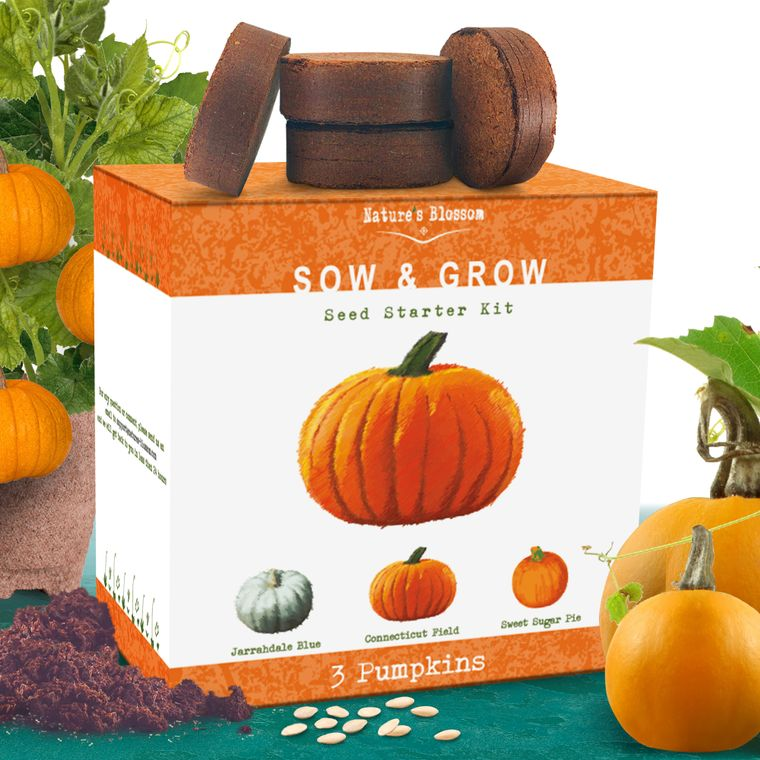 Nature's Blossom Pumpkin Growing Kit
