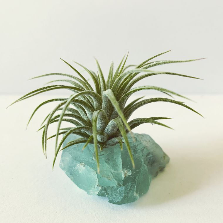 "Fluorite ""Serenity"" Crystal with Live Air Plant Tillandsia, Meditation Room, Air Plant Gemstone Gift"
