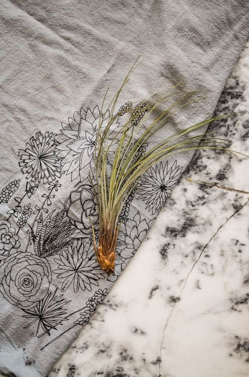 Gray Succulent Tea Towel