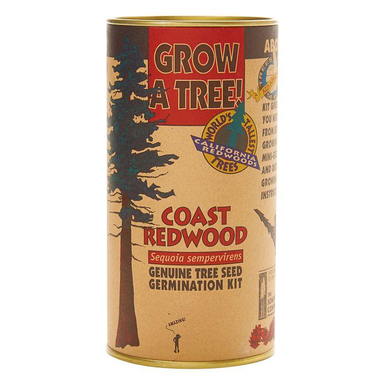 Coast Redwood | Seed Grow Kit | The Jonsteen Company