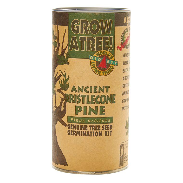 Bristlecone Pine | Seed Grow Kit | The Jonsteen Company