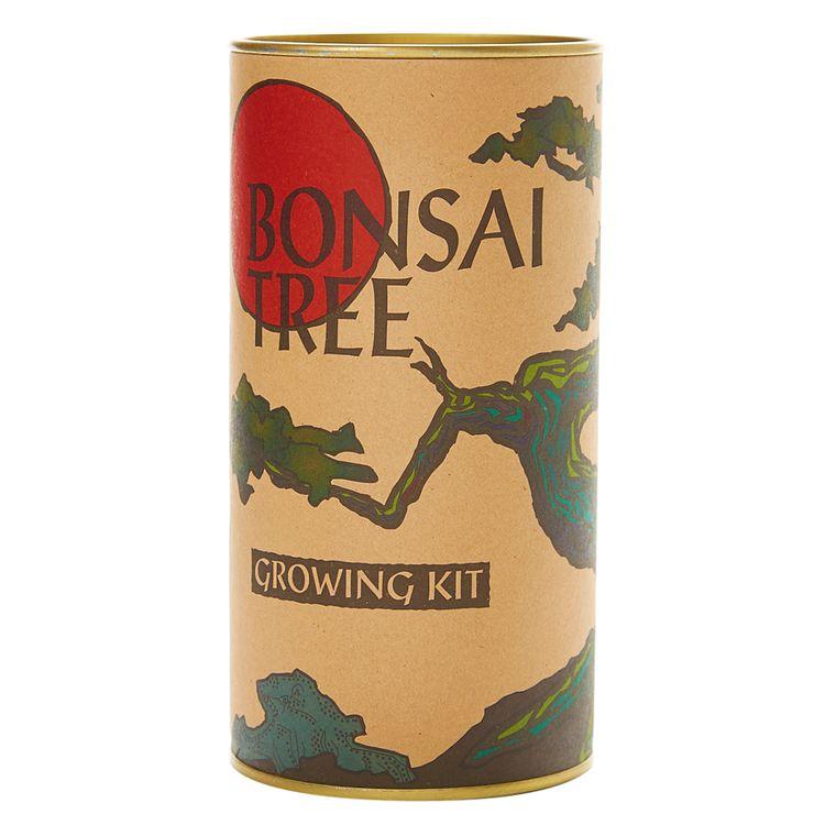 Bonsai Tree | Japanese Maple | Seed Grow Kit | The Jonsteen Company