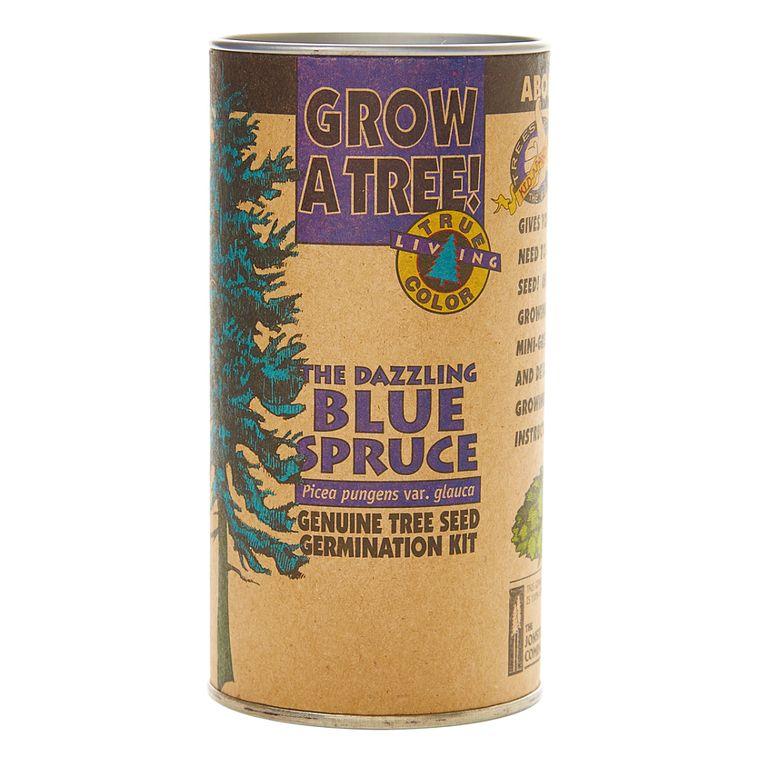 Colorado Blue Spruce | Seed Grow Kit | The Jonsteen Company