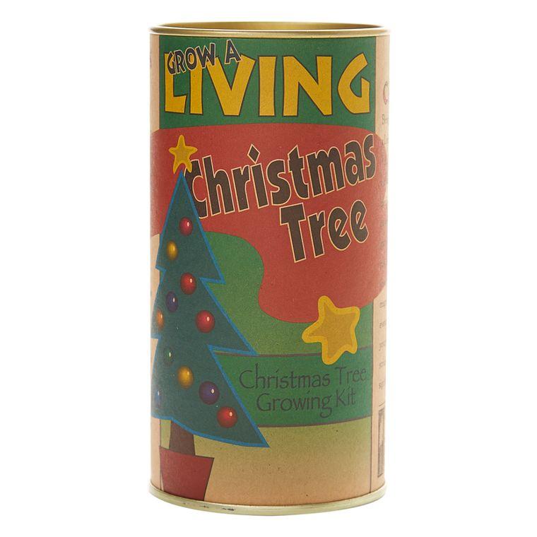 Living Christmas Tree | Balsam Fir | Seed Grow Kit | The Jonsteen Company