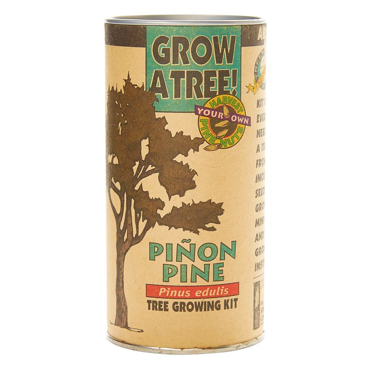Piñon Pine | Seed Grow Kit | The Jonsteen Company
