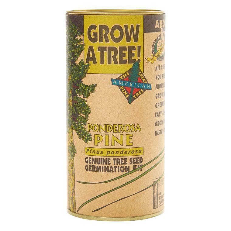 Ponderosa Pine | Seed Grow Kit | The Jonsteen Company