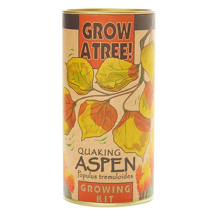 Quaking Aspen | Seed Grow Kit | The Jonsteen Company