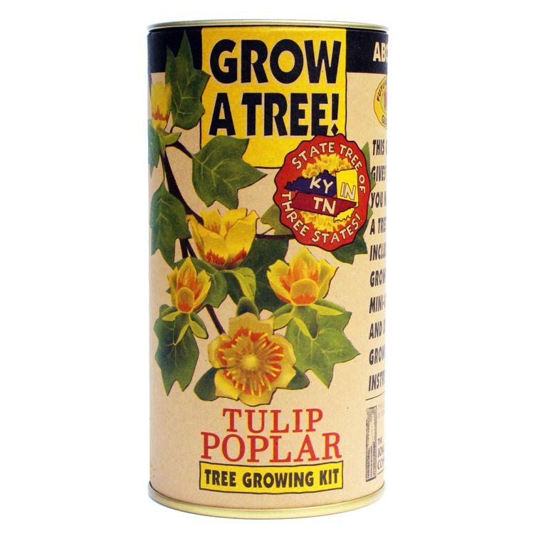 Tulip Poplar | Seed Grow Kit | The Jonsteen Company