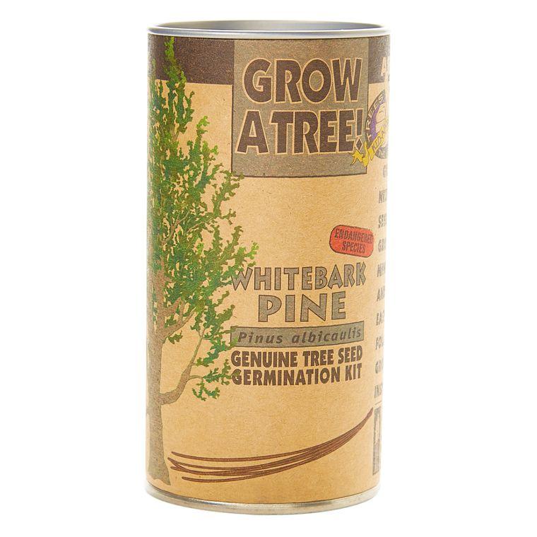 Whitebark  Pine | Seed Grow Kit | The Jonsteen Company