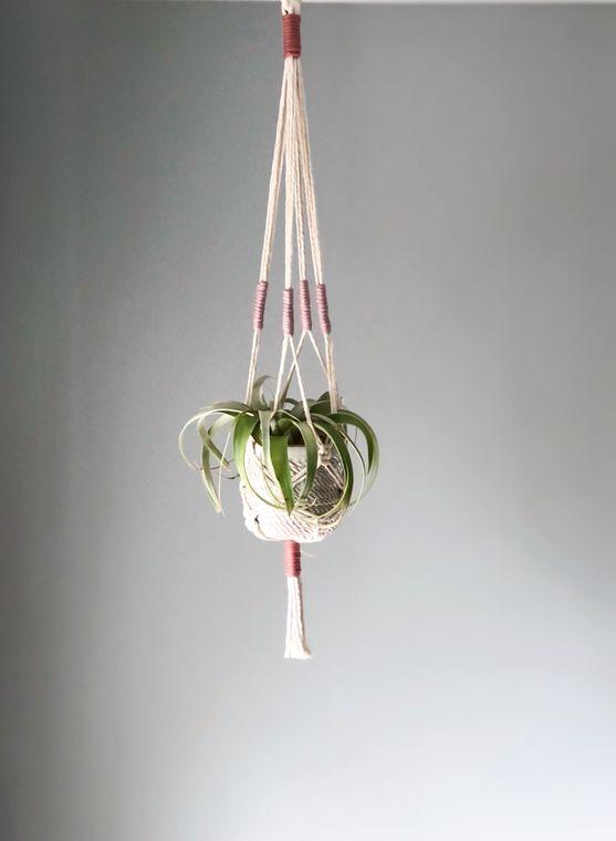 Macrame Accent Color Plant Hanger