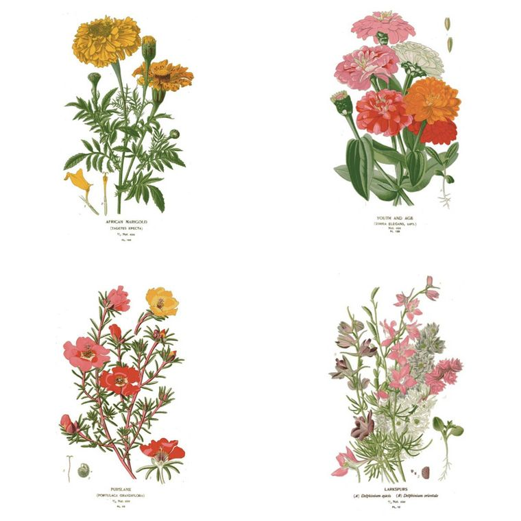Botanical Greeting Cards - Set of 4