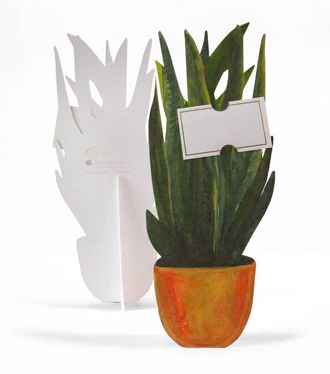 Snake Plant Florever Single Card