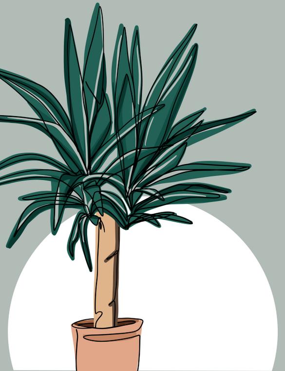 Yucca - 8x10 Print
