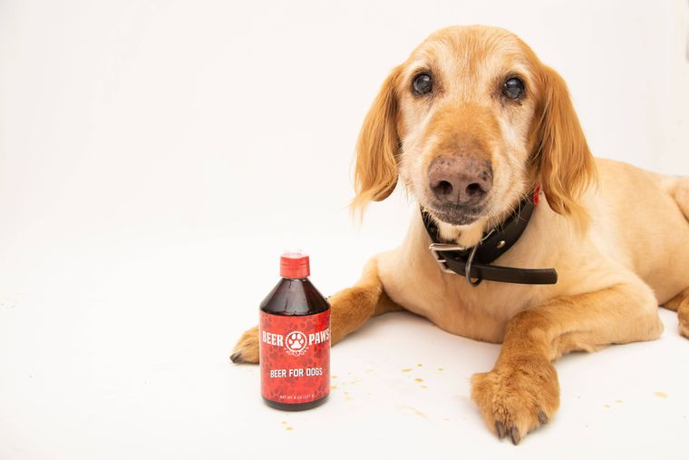 Beer Paws Craft Beer for Dogs - Pack of 6