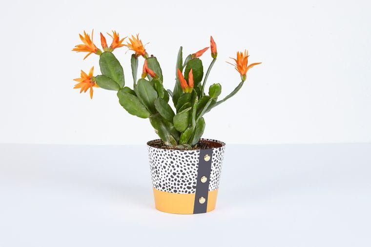 Spores Pot Cover - Medium