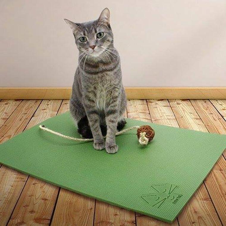 Olive Green Yoga Cat Mat